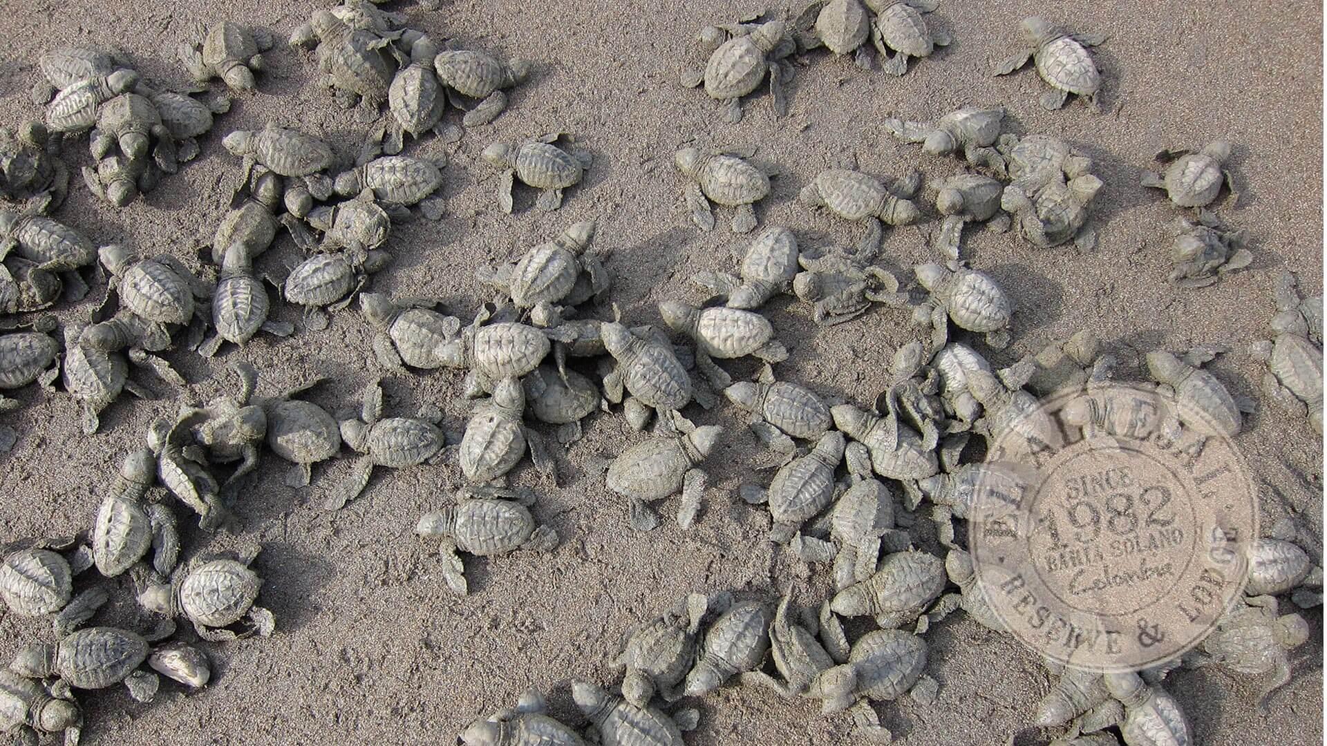 El Almejal Nacimiento tortugas golfinas