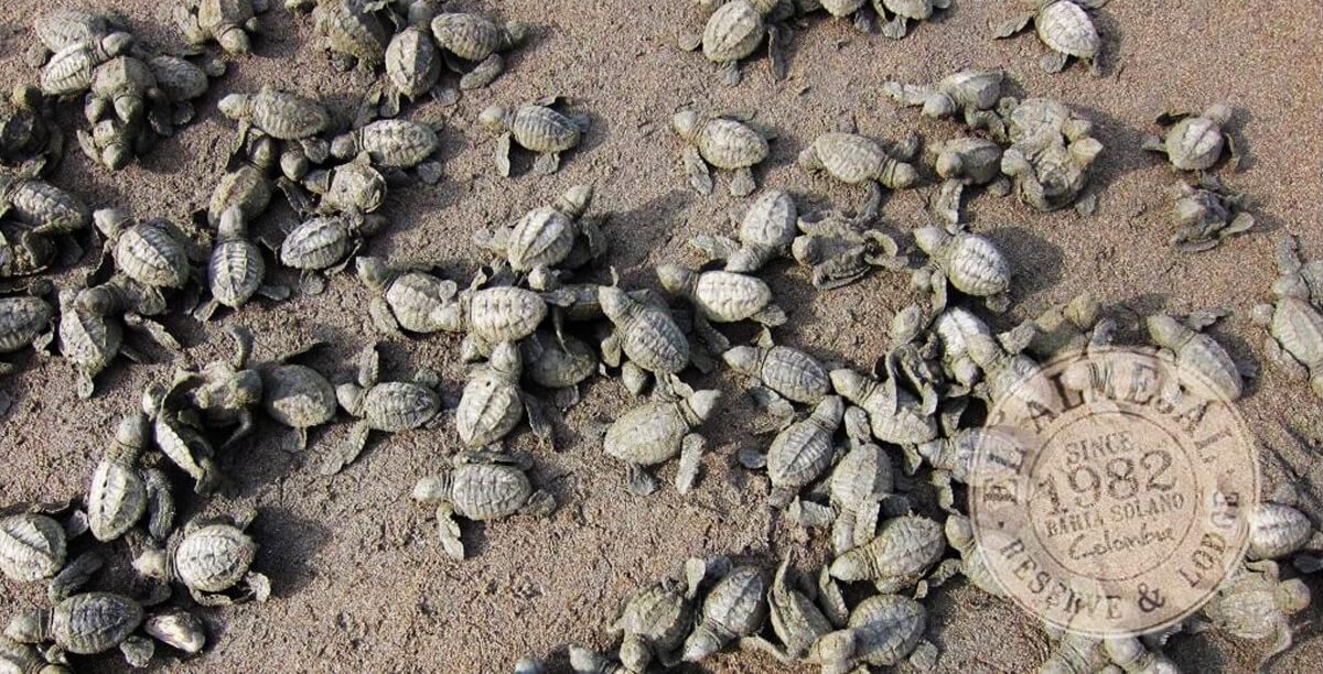 almejal-nacimiento-de-tortugas-1