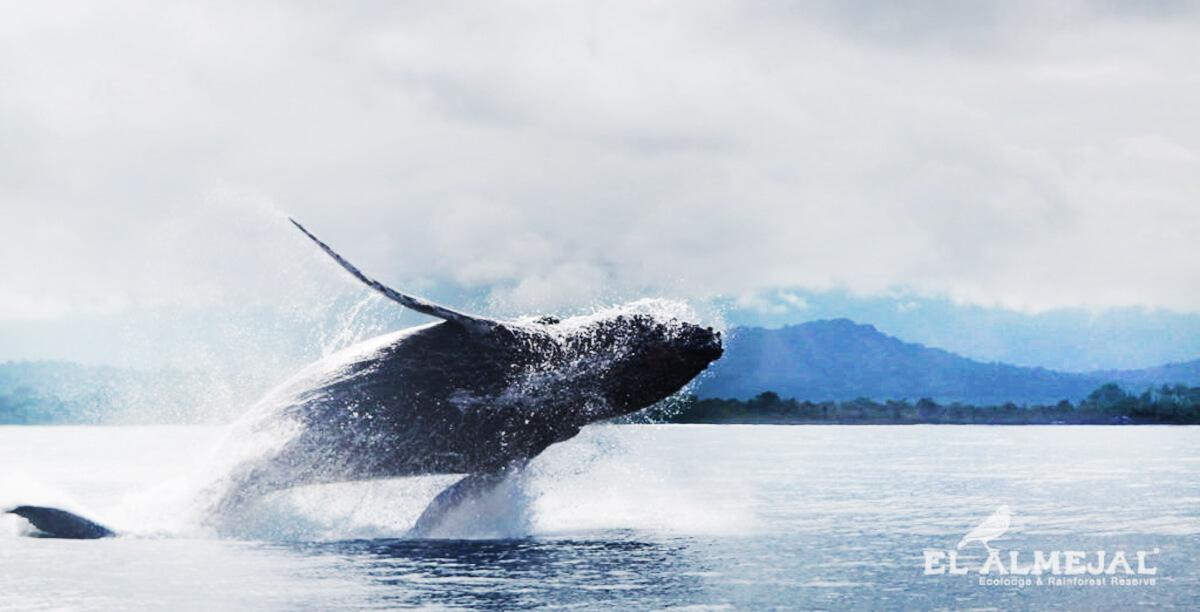 avistameinto-de-ballenas