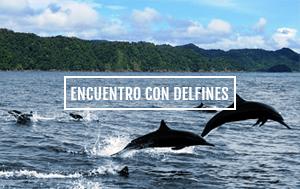 Delfines en El Almejal - Hoteles en Bahía Solano Pacífico Colombiano