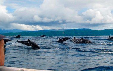 El-Almejal-delfines