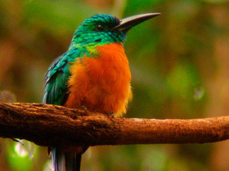 VidaSilvestre - Birdwatching Hotel El Almejal