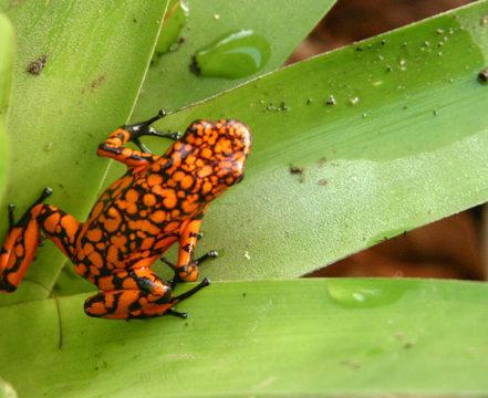 Vida Silvestre - El Almejal - Hoteles en Bahía Solano Pacífico Colombiano