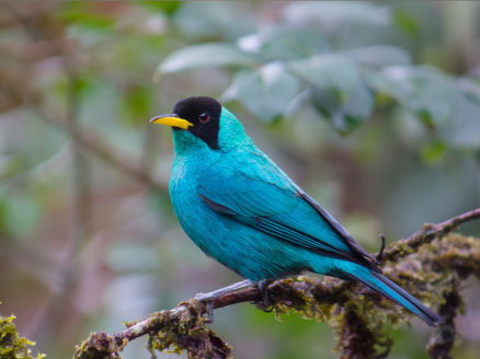 VidaSilvestre - BirdWatching El Almejal
