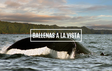 Ballenas a la vista - El Almejal