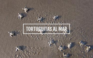 Tortuguitas al mar - El Almejal
