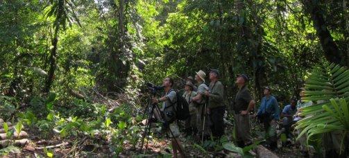Birdwatching - El Almejal - Hoteles en Bahía Solano Pacífico Colombiano