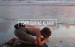 Tortuguitas al Mar. Hoteles en Bahía Solano. El Almejal