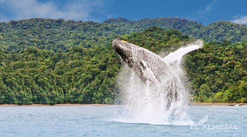 Avistamiento de Ballenas en Colombia. Bahía Solano