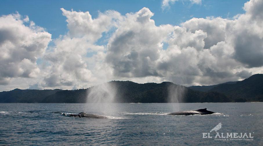 Avistamiento de Ballenas en Colombia