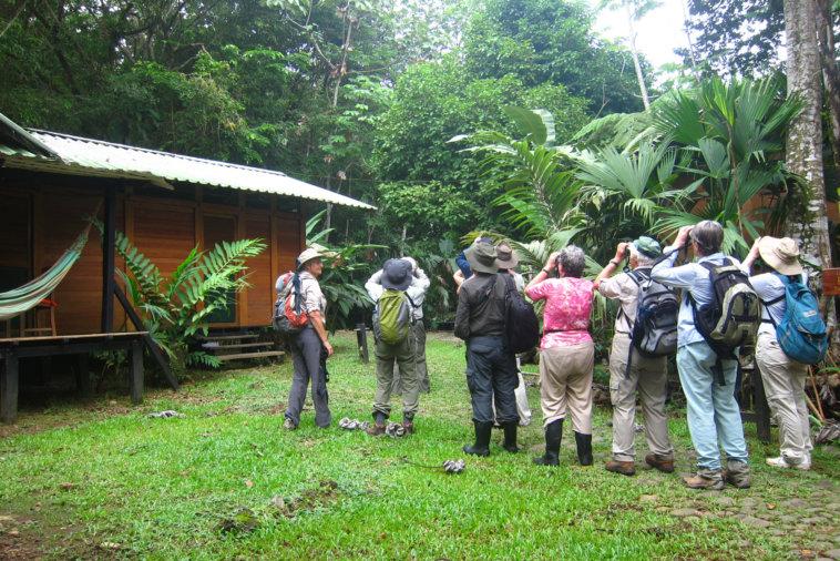 birdwatching en el almejal ecoturismo en el pacifico colombiano