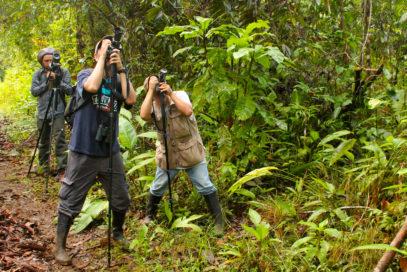 birdwatching_el-almejal-birdwatching-avistaje-de-pajaros