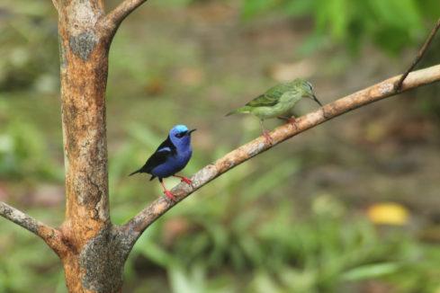 HOTEL EL ALMEJAL Birdwatching_herpetotheres-cachinans mielero patirrojo
