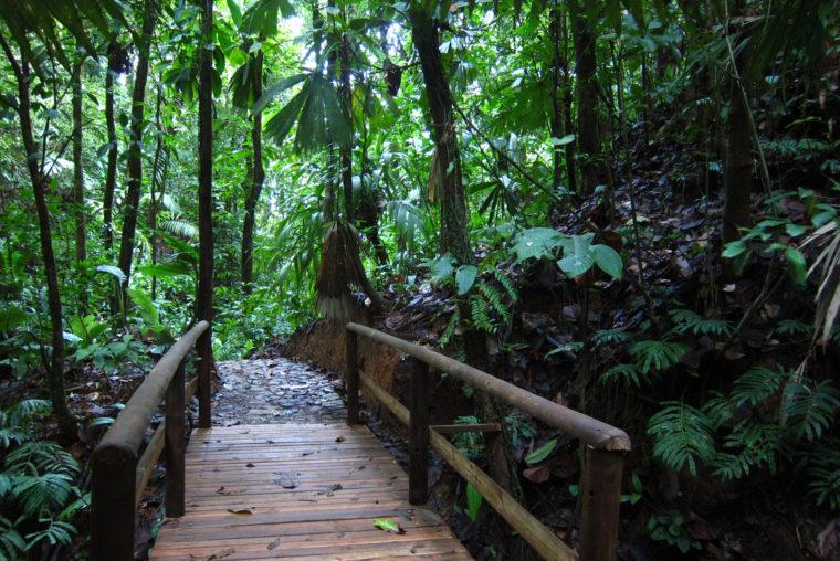 reserva natural hotel el almejal pacifico colombiano