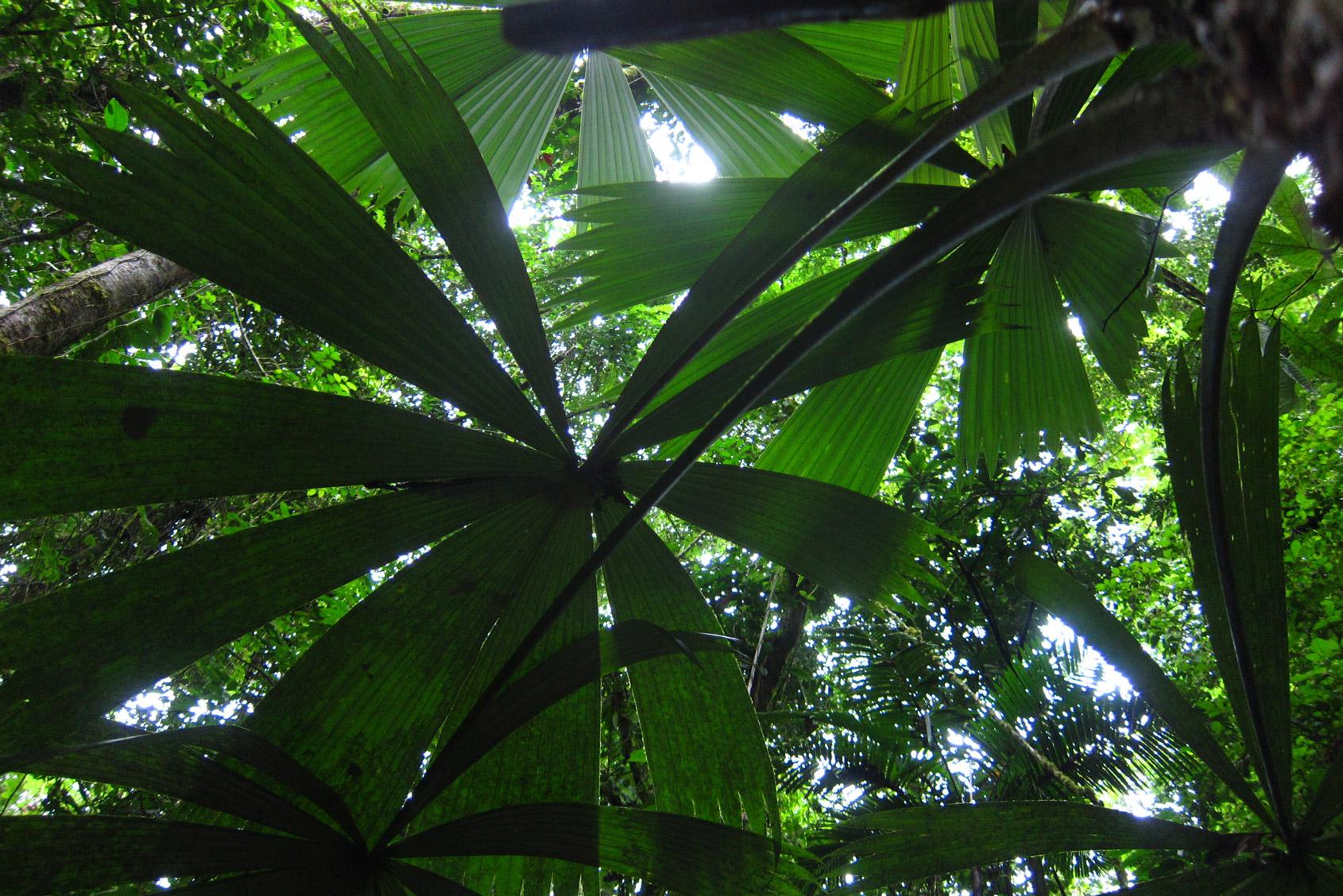 reserva natural el almejal, hotel el almejal pacifico colombiano