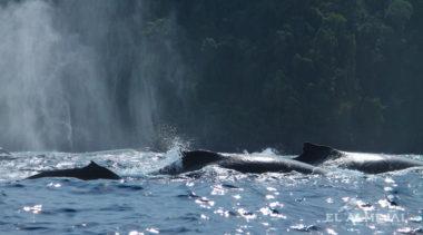 Avistamiento de ballenas en colombia, El almejal