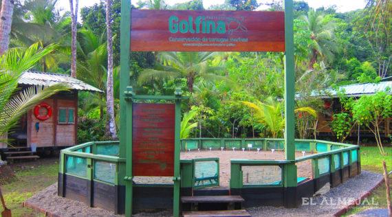 GOLFINA NACIMIENTO DE TORTUGAS EL ALMEJAL HOTEL EN BAHIASOLANO PACIFICO COLOMBIANO