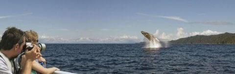 Avistamiento ballenas en el pacifico colombiano