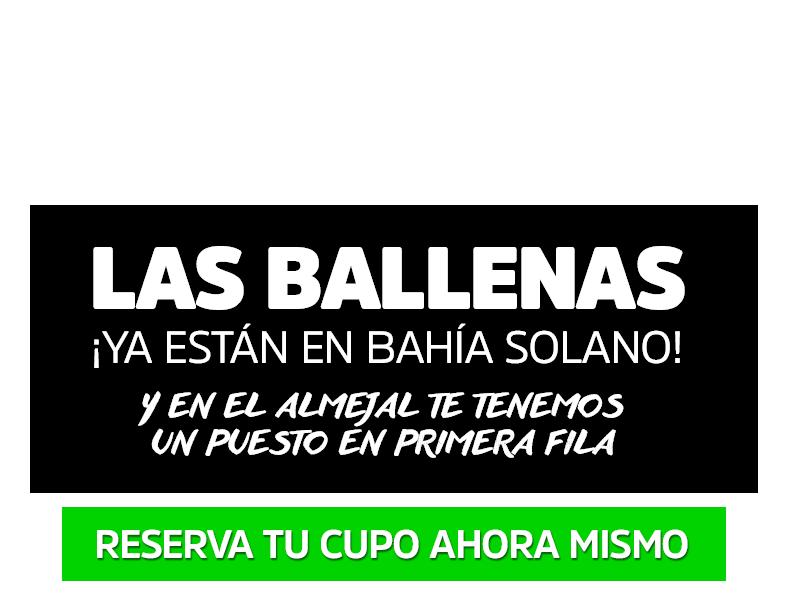 Avistamiento de Ballenas | Bahía Solano - ¡Reserva tu cupo!