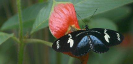 Biodiversidad del Pacífico Colombiano. El Almejal Bahía Solano